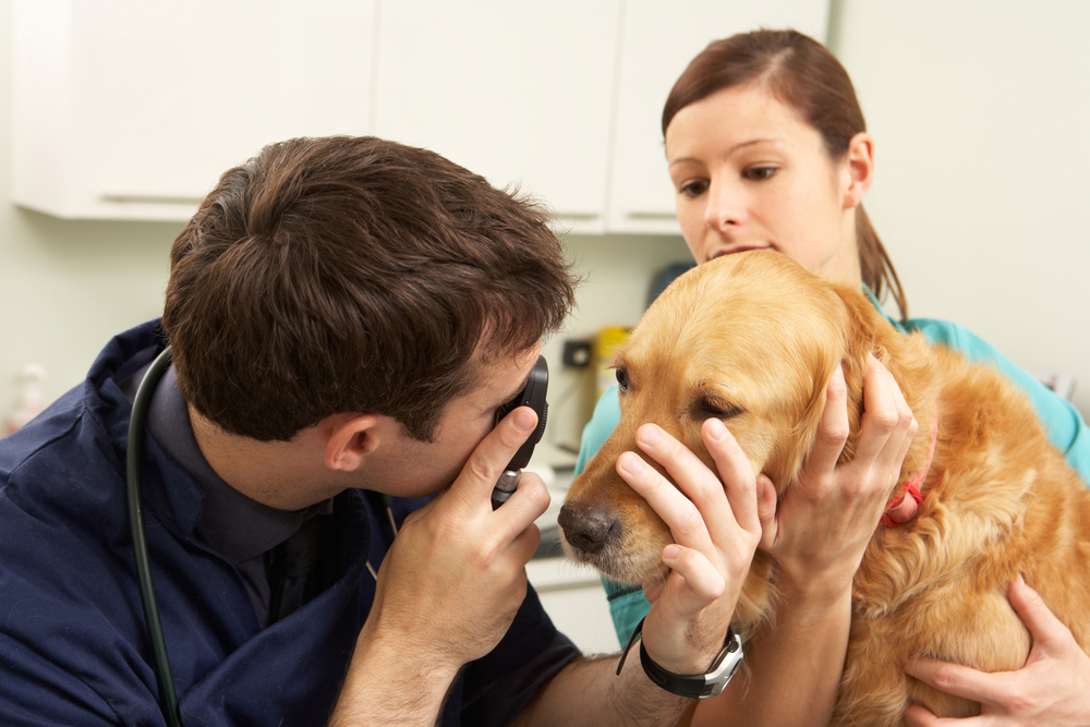 pet surgery FAQs from your veterinarian in Clifton, NJ