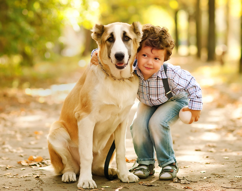 child with senior dog