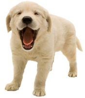 Pet Periodontal Disease
