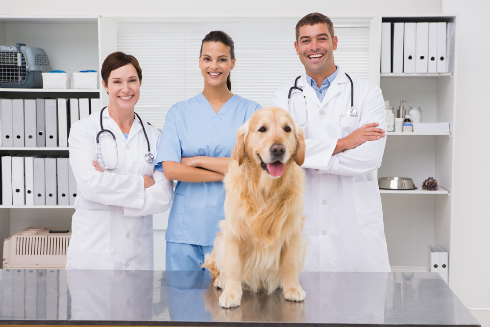 veterinarians in Clifton during a pet exam to test for pet diabetes