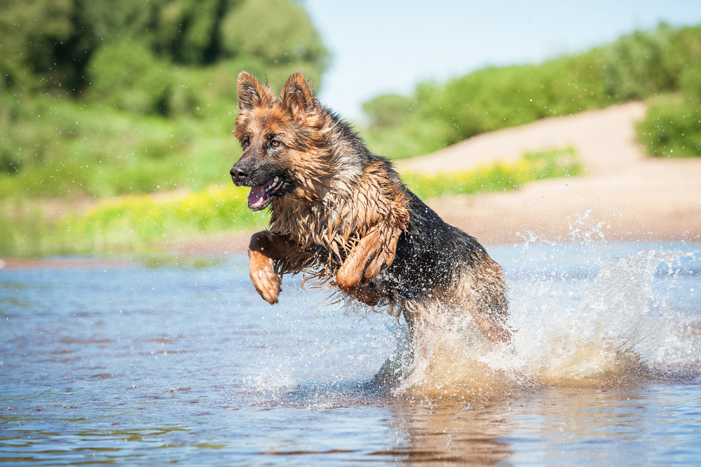 dog practicing hydrotherapy in the water