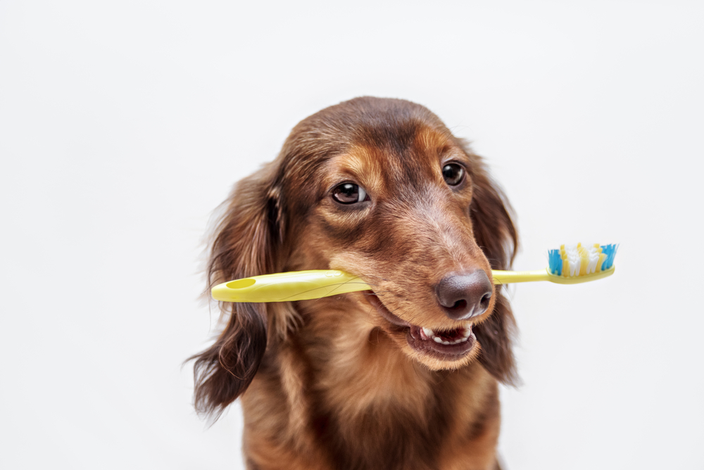 pet dental care from our veterinarian in clifton NJ