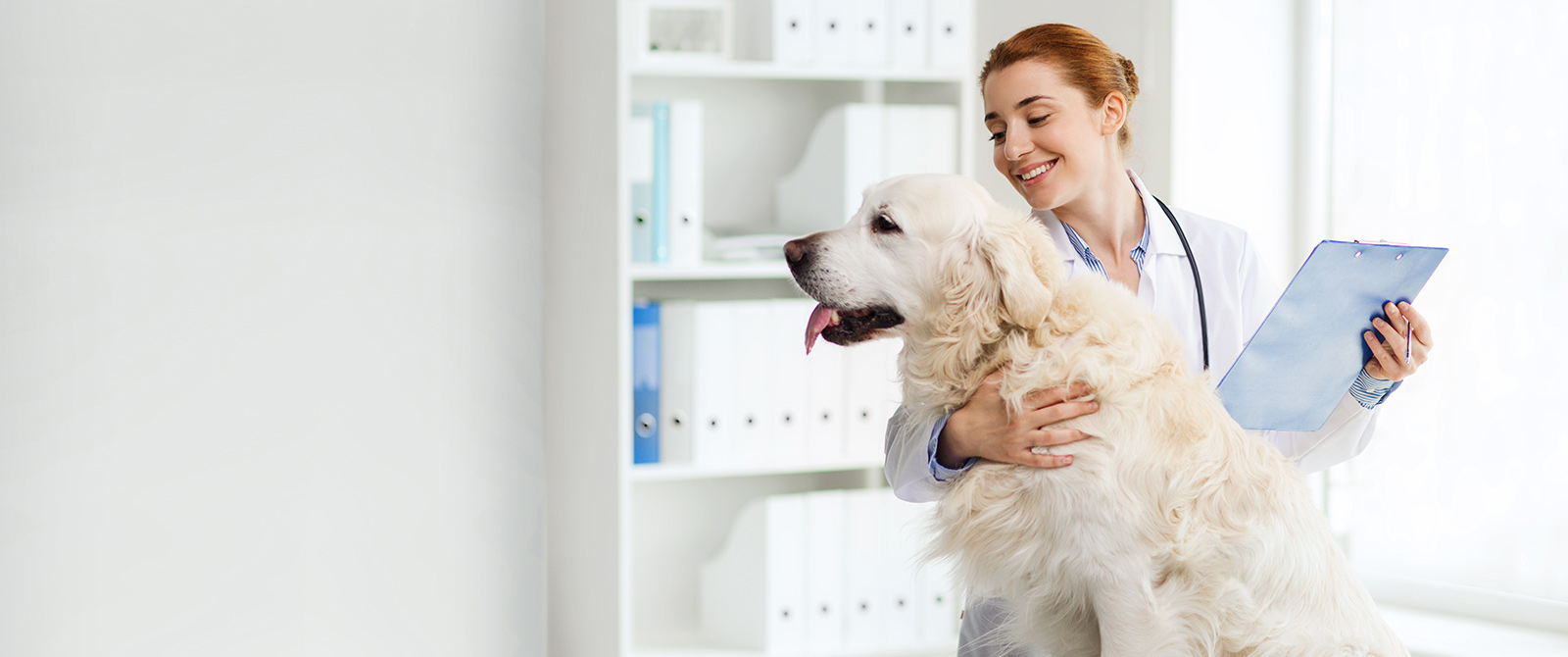 Pet Behavioral Counseling in Clifton